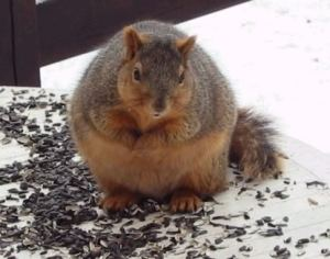 Not related to the article, but look how fat this goddamned squirrel is